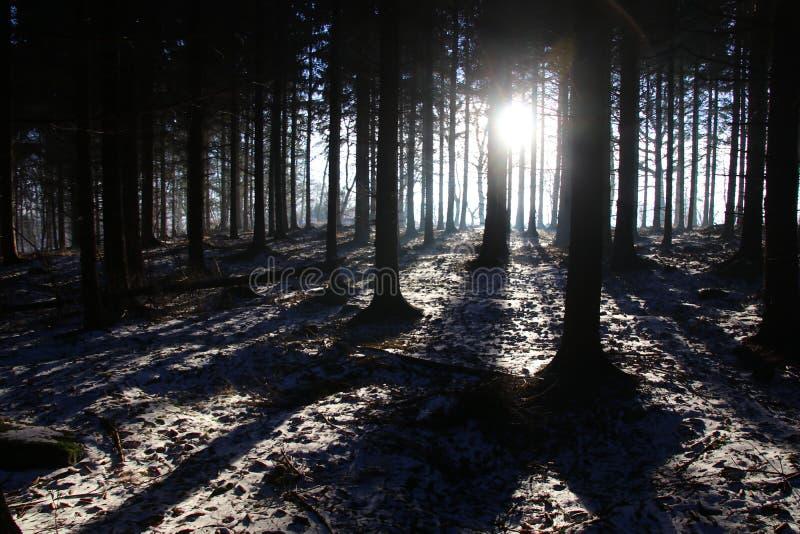 Idyll i skogen i Februari fotografering för bildbyråer