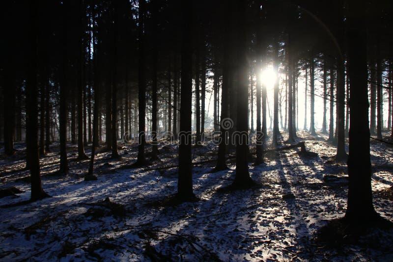 Idyll i skogen på så älskvärd soluppgång royaltyfria foton
