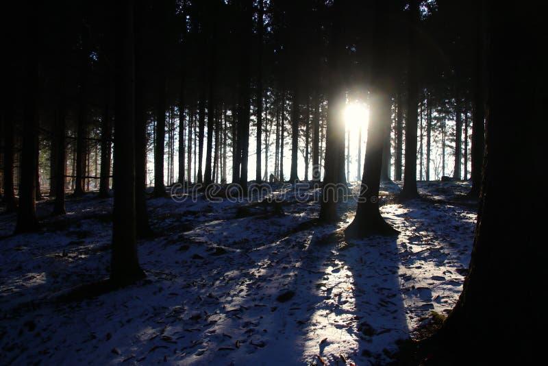 Idyll i skogen på så ljus soluppgång royaltyfria foton