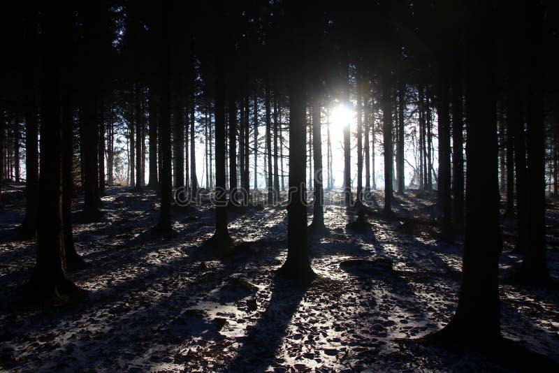 Idyll i skogen på soluppgång arkivfoton