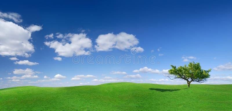 Idyll panorama- landskap, ensamt träd bland gröna fält arkivfoton