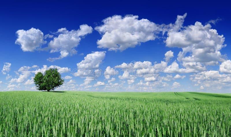 Idyll panorama- landskap, ensamt tr?d bland gr?na f?lt royaltyfria foton