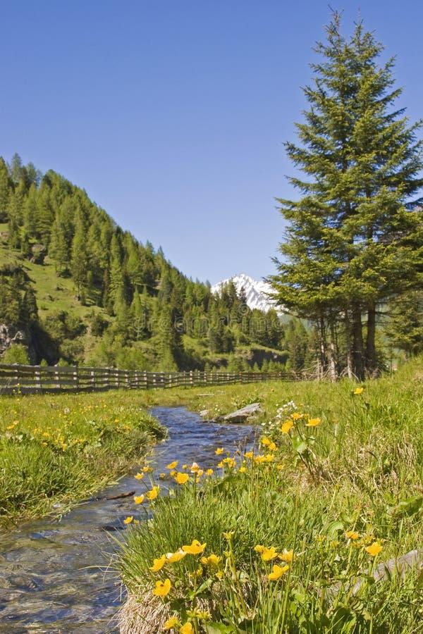 Idylla w cugiel dolinie w Południowym Tyrol zdjęcie stock