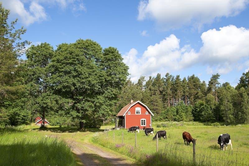 Idylle suédoise avec la maison en bois rouge images libres de droits