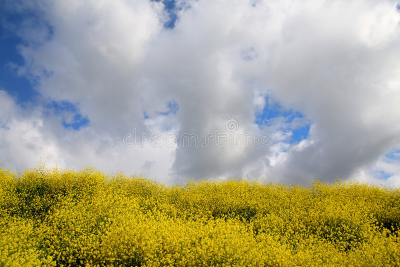 Download Idyllic stock image. Image of green, yellow, flowers, bright - 6562139