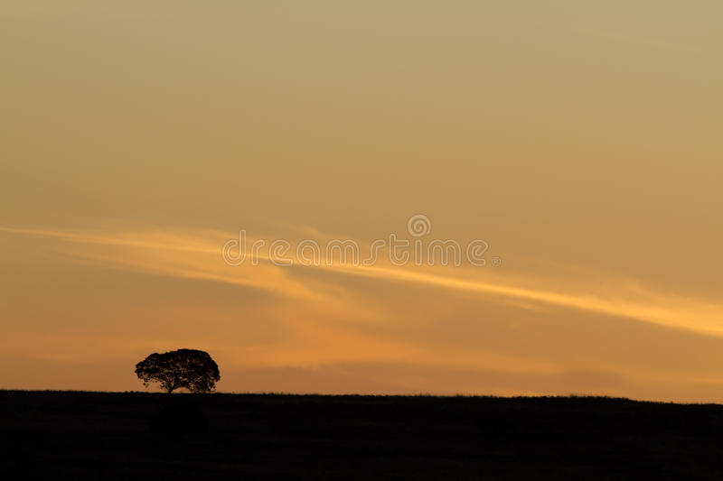 Download Idyllic African Landscape Stock Photography - Image: 16283942