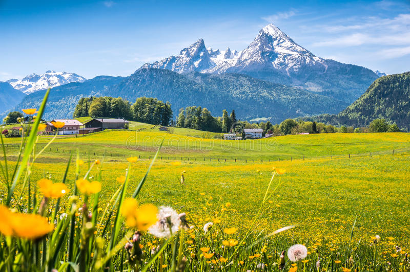 Idyllic alpine landscape with green meadows, farmhouses and snowcapped mountain tops. Idyllic landscape in the Alps with fresh green meadows, blooming flowers stock photography