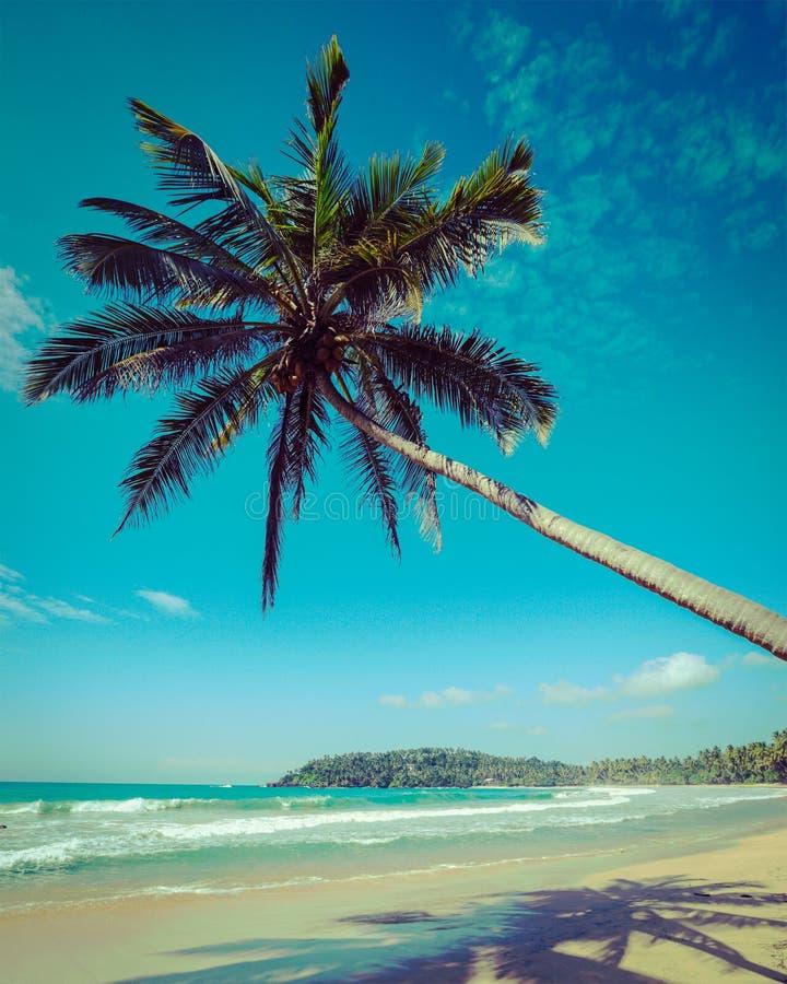 Download Idyllic Beach With Palm. Sri Lanka Stock Photo - Image: 39490062
