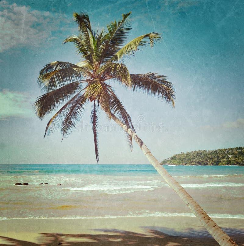 Download Idyllic Beach With Palm. Sri Lanka Stock Image - Image: 39553295