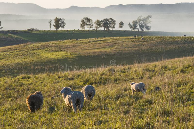Idyllic countryside landscape of Batovi Hill, Uruguay stock photography