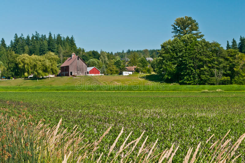 Download Idyllic Family Farm Landscape Stock Image - Image: 20447081