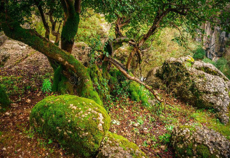 Idyllic forest landscape with mossy stone, mossy tree trunk and its root. Manavgat, Antalya, Turkey royalty free stock photos