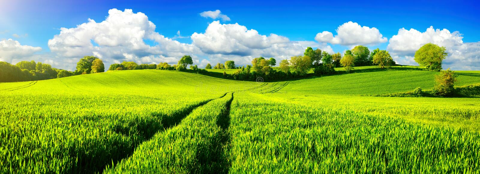 Idyllic green fields with vibrant blue sky stock photography