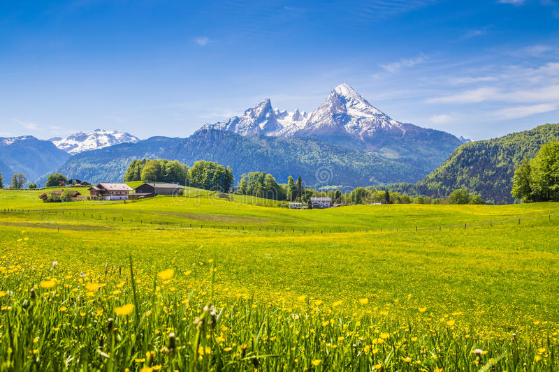 Idyllic landscape in the Alps with green meadows and flowers royalty free stock photography