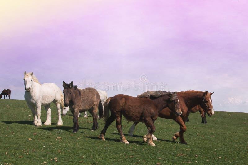 Idyllic landscape with grazing horses and donkey at sunset stock photo