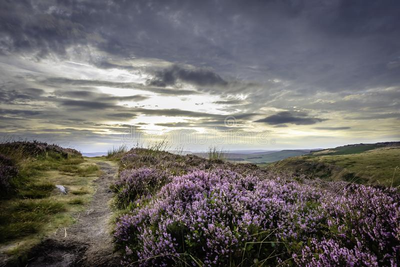 Idyllic landscape of Peak District National Park, Derbyshire, Uk. Path on top of the hill, purple heather growing on moorland and moody sky above horizon during stock image