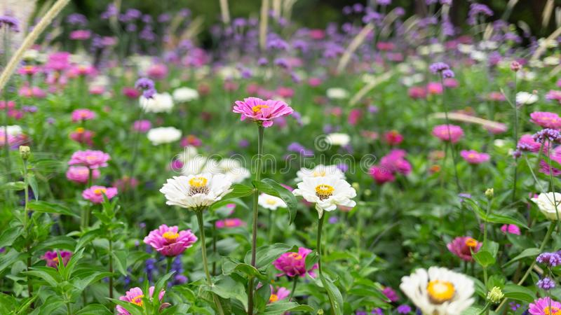 Idyllic landscape scene of garden flowers in a park. Gardening and countryside concept stock images