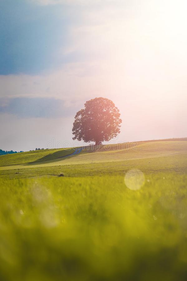 Idyllic landscape scenery in summer: Tree and green meadow, blue sky royalty free stock image