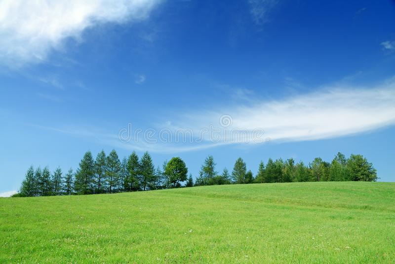 Idyllic landscape, view of green fields and blue sky royalty free stock photography