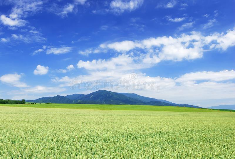 Idyllic landscape, view of green fields and blue sky stock photo