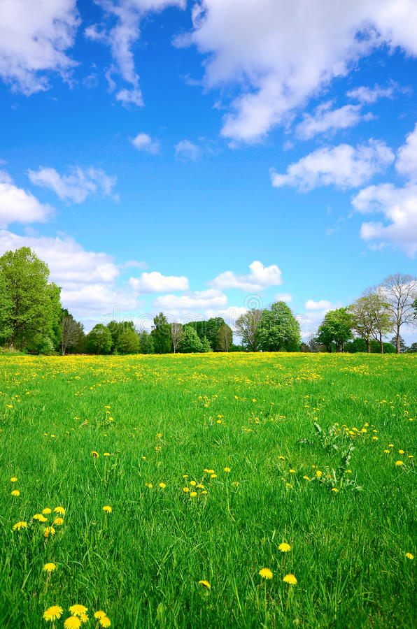 Download Idyllic meadow stock image. Image of farming, colorful - 31181561