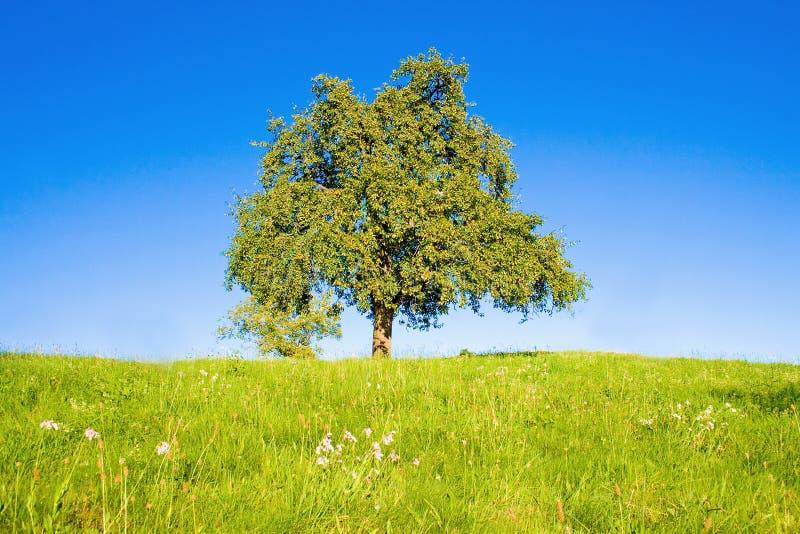 Idyllic Meadow With Tree Royalty Free Stock Photos