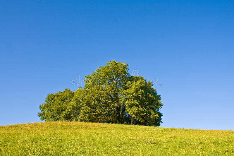 Download Idyllic meadow with tree stock image. Image of pasture - 11238353