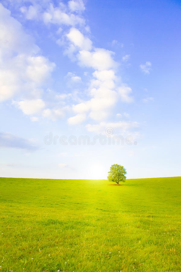 Idyllic Meadow With Tree Stock Images