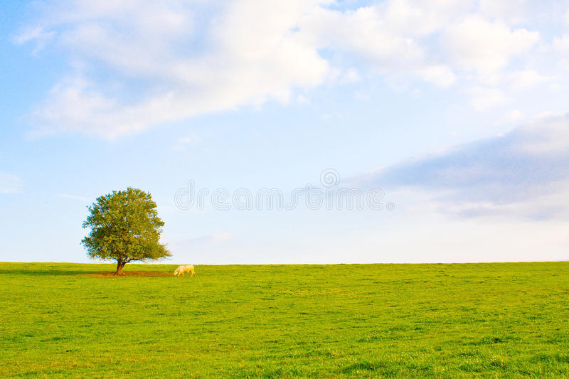 Download Idyllic Meadow With Tree Stock Image - Image: 11238391