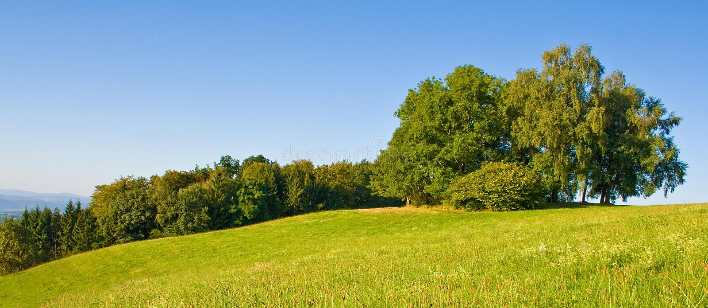 Idyllic meadow with tree royalty free stock image
