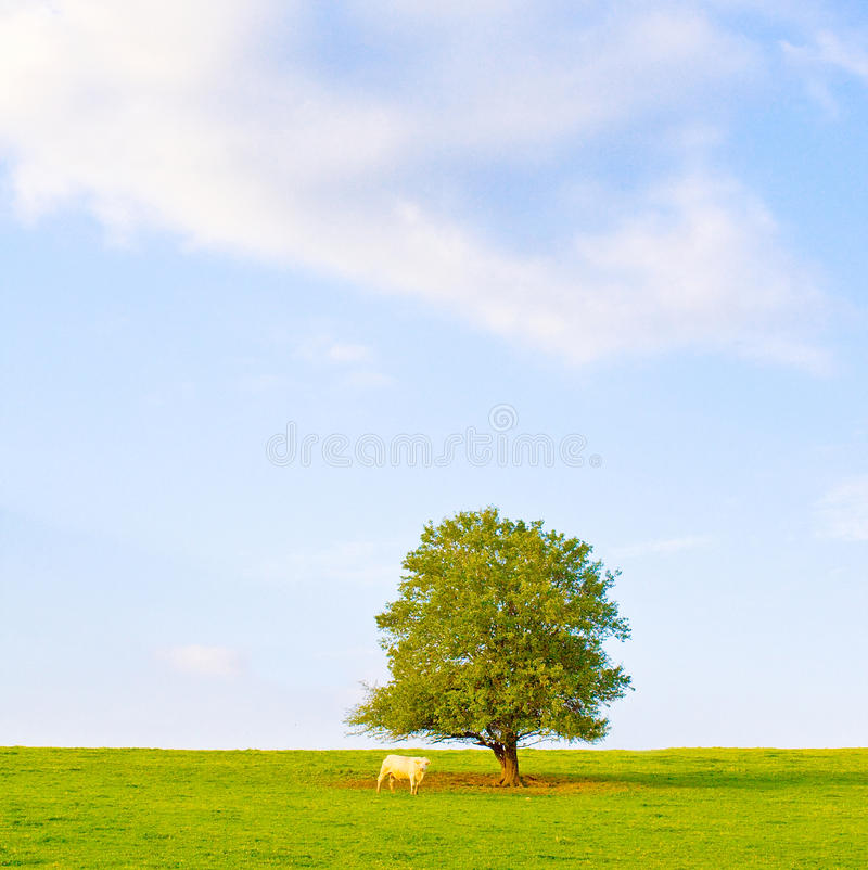 Download Idyllic meadow with tree stock photo. Image of beautiful - 11238410