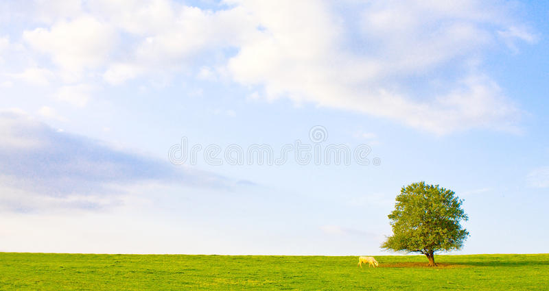 Download Idyllic meadow with tree stock image. Image of green - 11238421