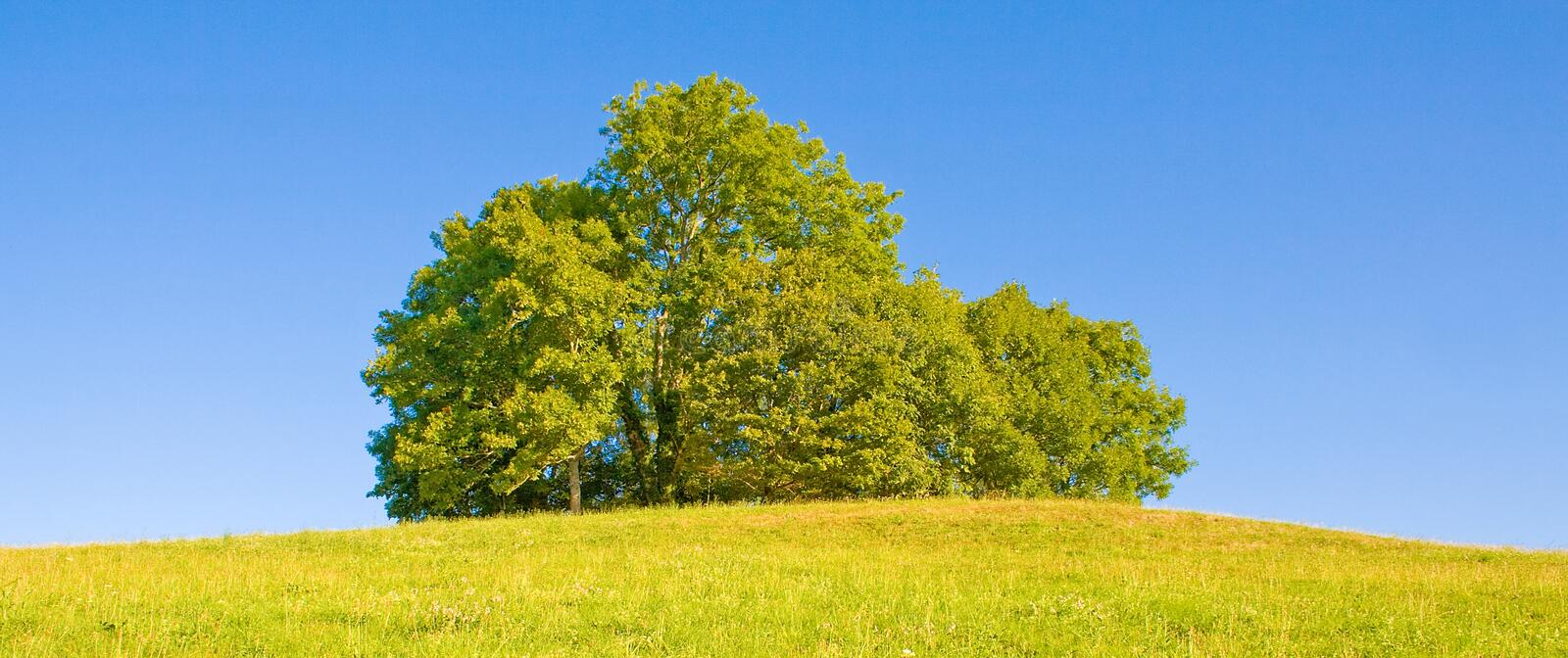 Download Idyllic meadow with tree stock photo. Image of lonely - 11327196