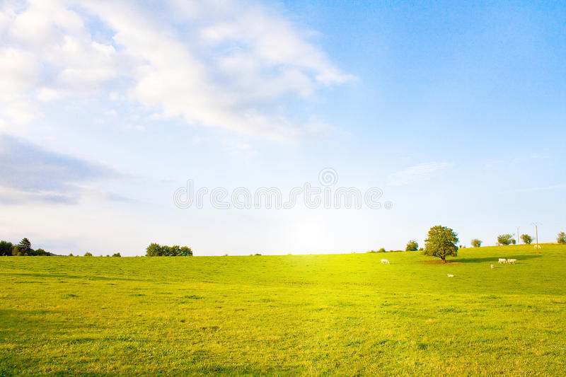 Download Idyllic Meadow With Tree Royalty Free Stock Photo - Image: 12303945