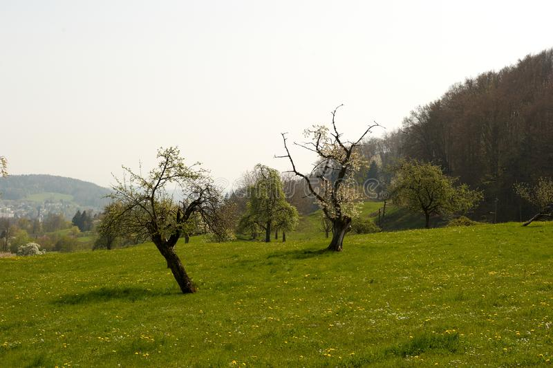 Download Idyllic Meadow with Trees stock photo. Image of foothills - 14064792