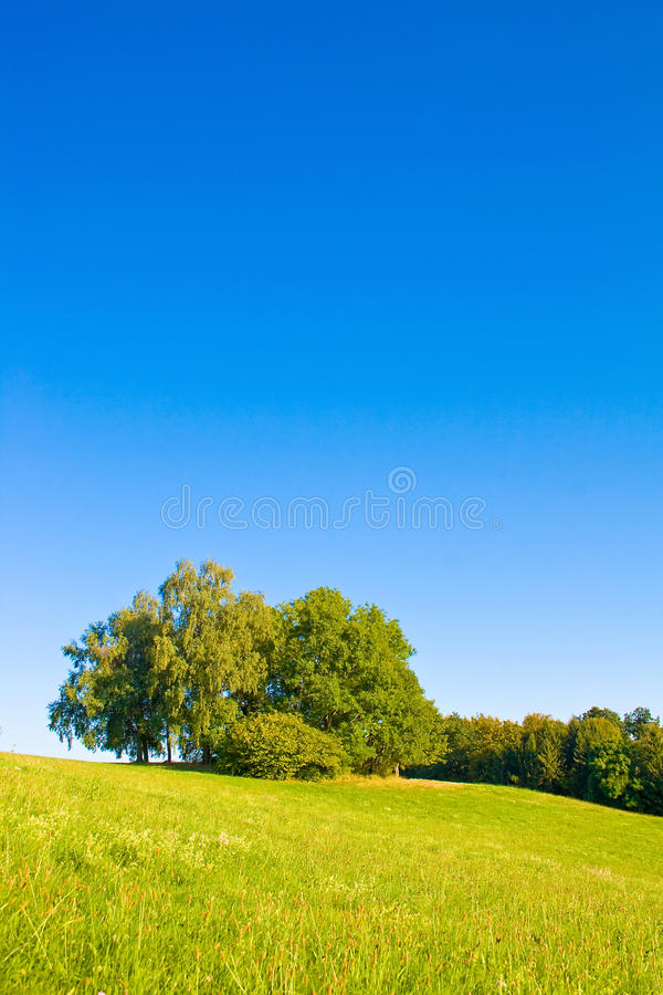 Free Idyllic Meadow With Tree Stock Image - 12304001