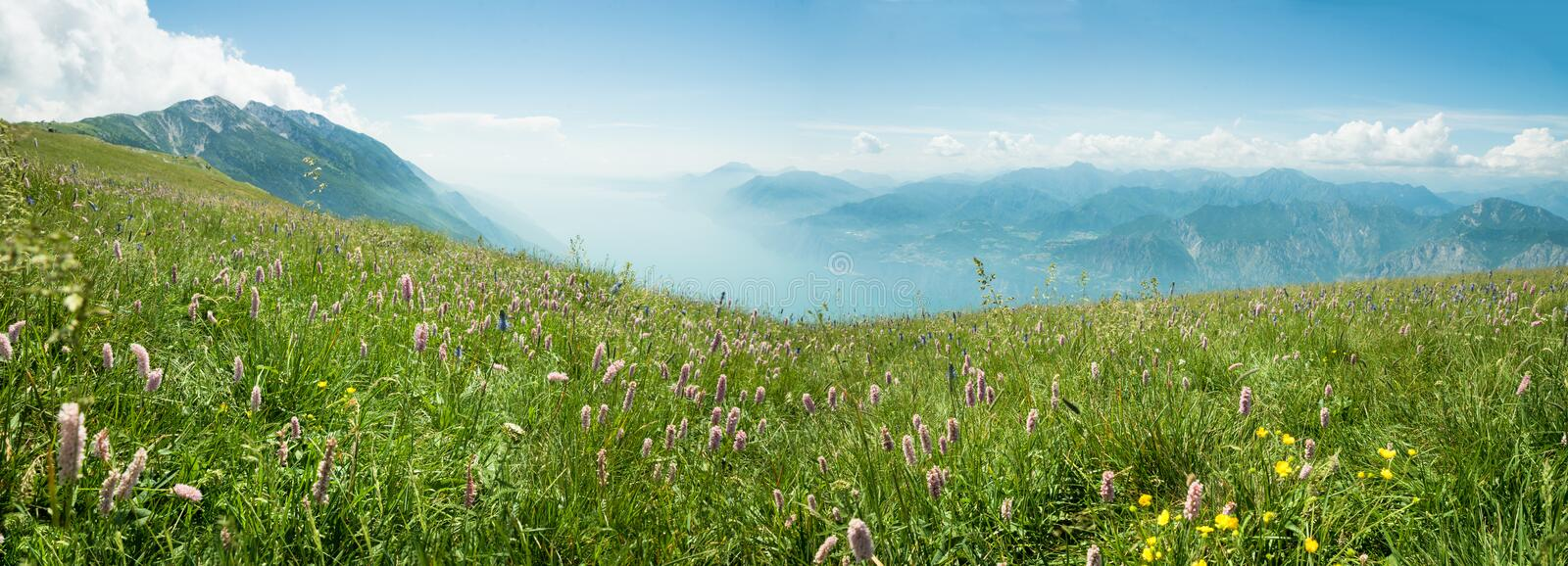 Idyllic mountain landscape monte baldo with beautiful pink knotgrass wildflower meadow and view to garda lake. Idyllic mountain landscape monte baldo with royalty free stock images