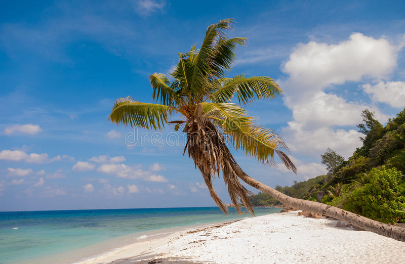 Idyllic Palm Tree On A Secluded Tropical Beach royalty free stock photos