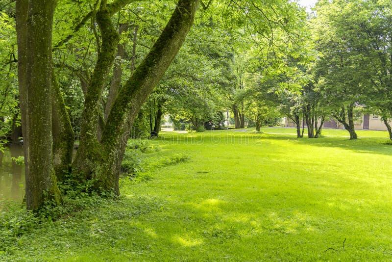 Idyllic park scenery royalty free stock image