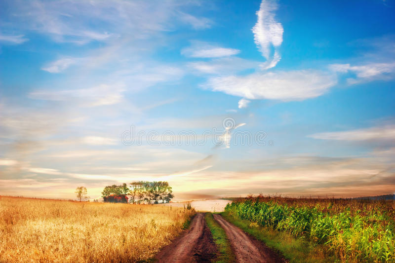 Idyllic rural landscape with road between two fields. stock photos