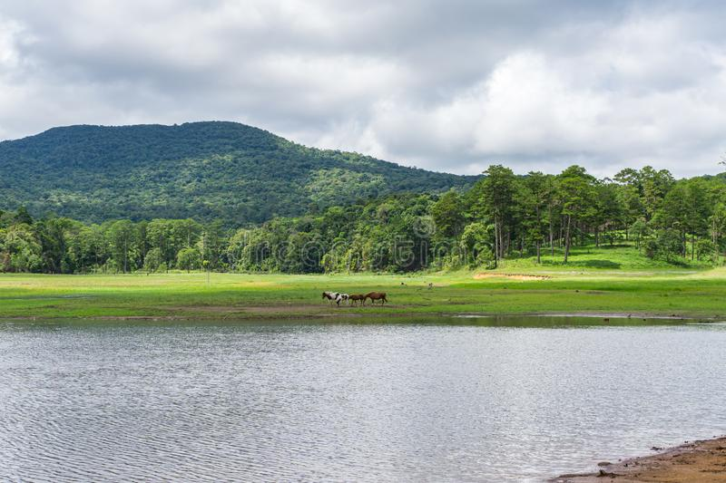 Idyllic scenery of highland and grazing pasture beside the lake. Tranquil scenery of highland and grazing pasture beside the lake stock photos