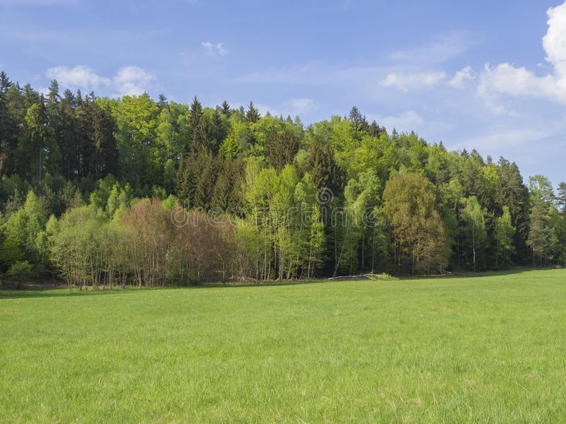 Idyllic spring landscape with lush green grass, fresh deciduous stock photos