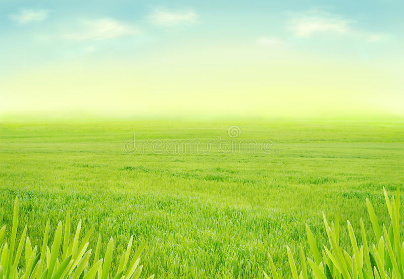 Idyllic Spring Meadow Stock Photos