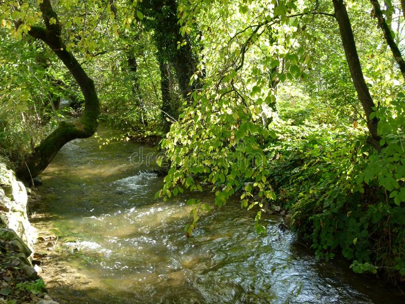 Idyllic stream with trees on the shore in beautiful light  2 stock photo