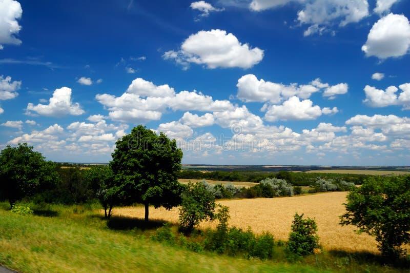 Download Idyllic summer landscape stock photo. Image of sunlight - 10130626