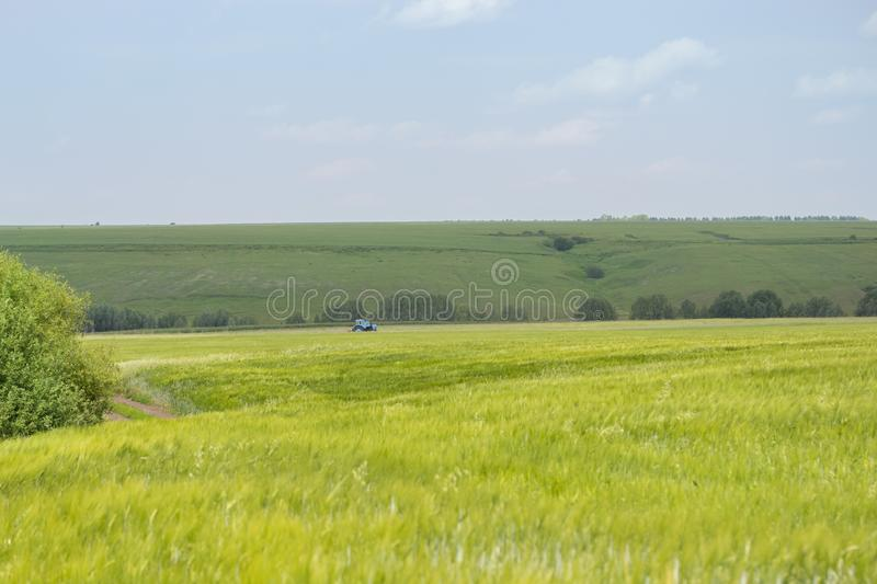 Idyllic sunny rural landscape, farm field bright green grass. A blue tractor in the distance harvesting rye wheat barley cereals royalty free stock images