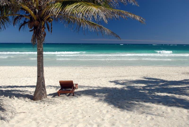 Download Idyllic tropical beach stock photo. Image of tree, tropical - 4164728