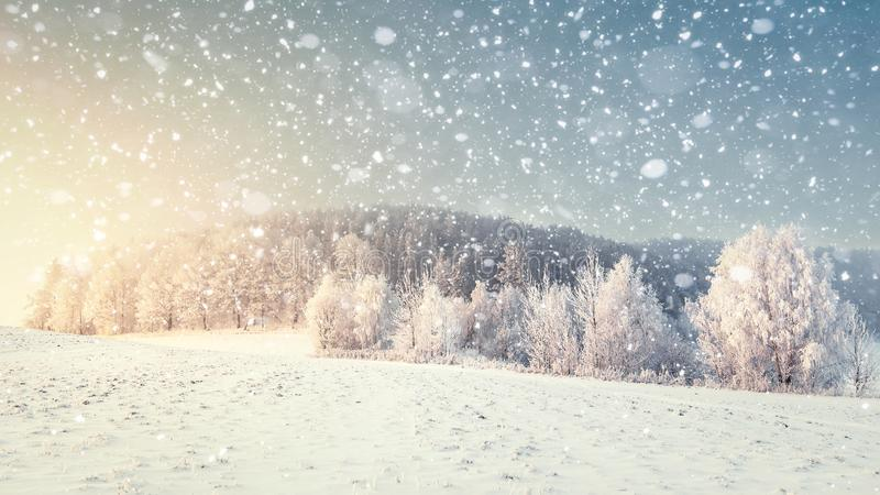 Idyllic winter landscape in snowfall. Christmas and New Year time. Snowflakes fall on snowy meadow with frosty trees royalty free stock images
