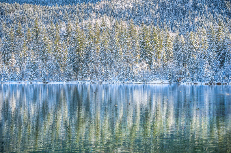 Idyllic winter wonderland with mountain lake and snow covered trees. Beautiful view of unspoilt winter wonderland scene with ducks swimming in cystal clear stock images