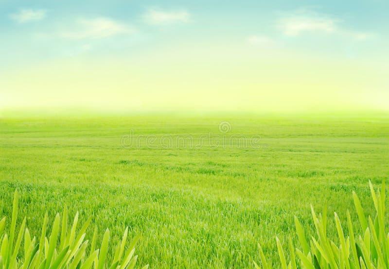 Idylliczna wiosny łąka zdjęcia stock